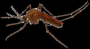 vaccinaties colombia mug inentingen malaria deet