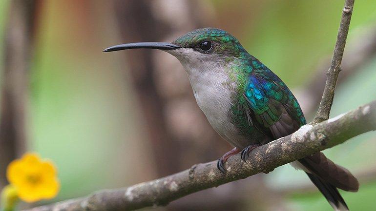 Colombia birdwatching vogels spotten kolibris