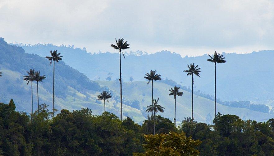 Salento Colombia palmbomen cocora vallei
