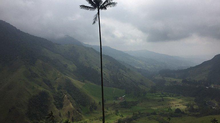 salento colombia hoogste palmboom ter wereld cocora