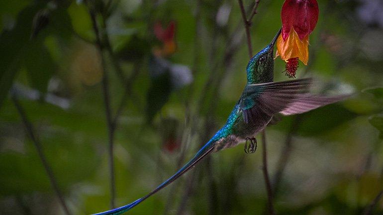 Salento Colombia kolibries Jardin Botanico Quindio Recuca Cocora